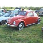 Nice Beetle
