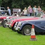 Nice collection of Morgans